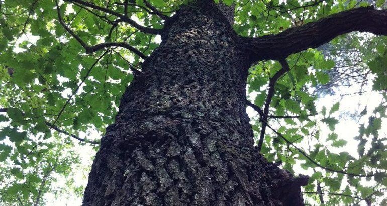 Múdrosť a sila stromov
